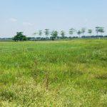 Kiểm tra, xử lý tình trạng gần 2000 ha đất dự án đô thị bị bỏ hoang ở Mê Linh (Hà Nội)
